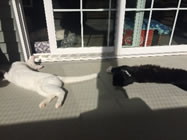 cats sun bathing